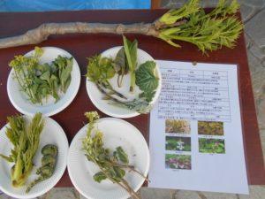 蜘ヶ家山春の野草観察ウォークでの山菜の天ぷら